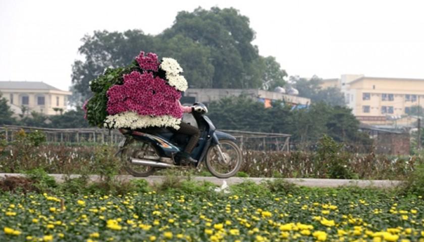 6 làng hoa Tết ba miền khoe sắc thu hút du khách