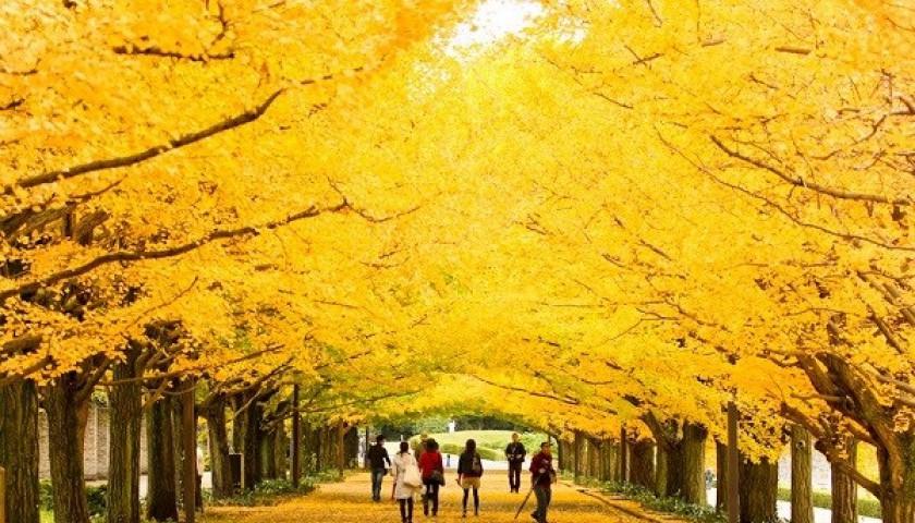 Mùa lá đổ Nhật Bản - Khoảnh khắc Thu diệu kỳ