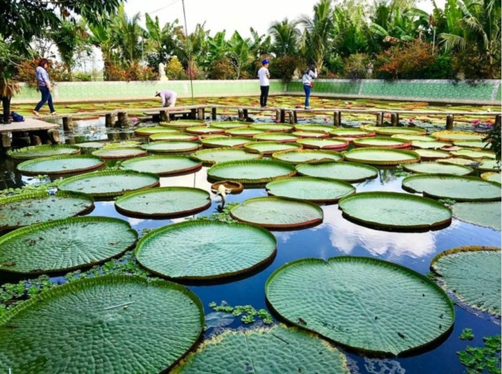 Tour Hành Hương Đồng Tháp 1 Ngày