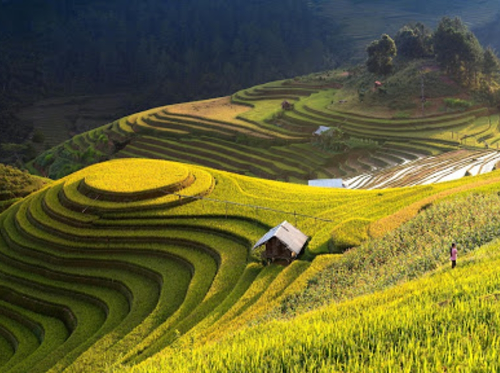 Tour Mù Cang Chải - Đèo Khau Phạ - Tú Lệ, 2n1d